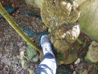 Iochroma australe (= Acnistus australis) - Page 2 Dscf5114