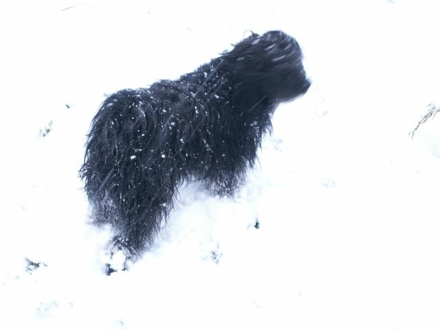 """Concours """"paysage d'hiver avec animal"""" - Les votes Neige_11"""