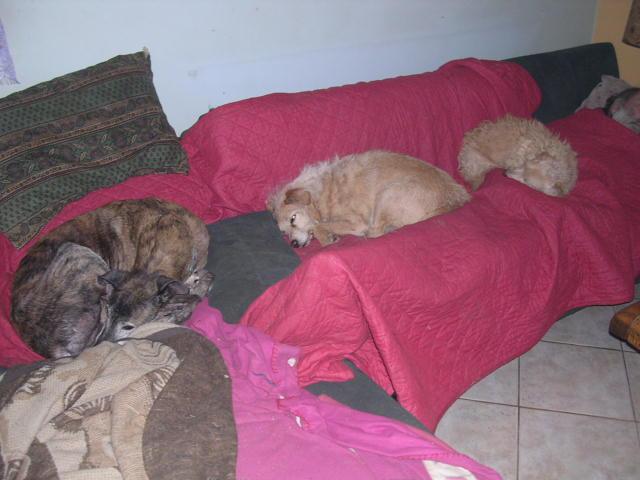 Mon zhom et les chiens Dscn7819