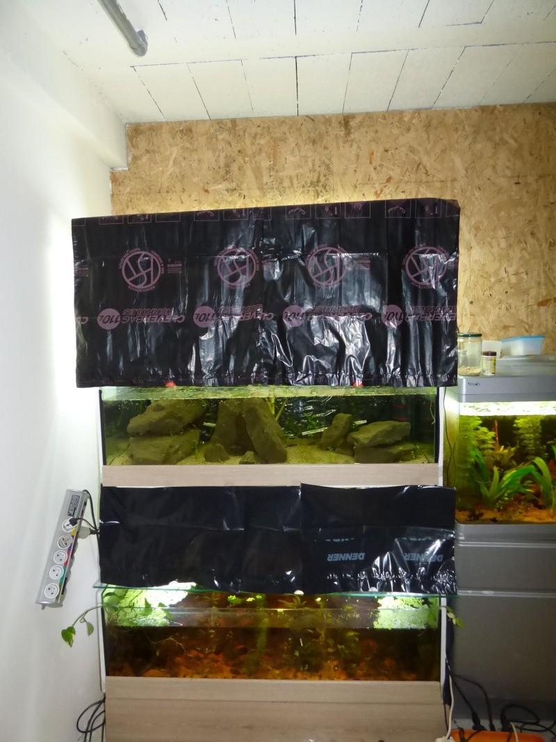 Ma petite fishroom - Page 3 P1000412