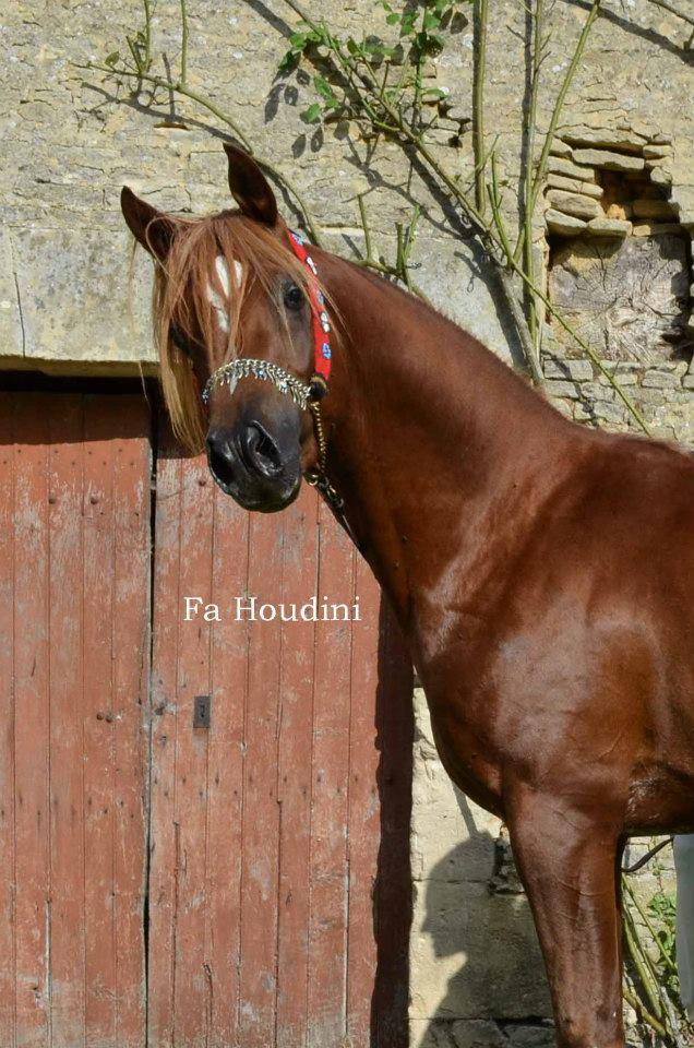 propose saillies fa houdini ps arabe 43154111