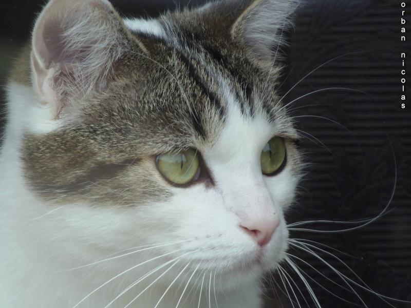 Le fil du chat - Page 6 P7020110