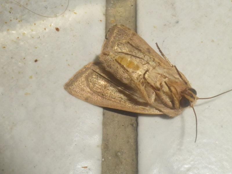 Papillon avec une tache rouge Imgp3410