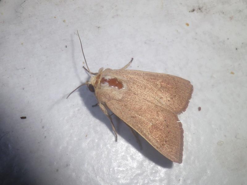 Papillon avec une tache rouge Imgp3411