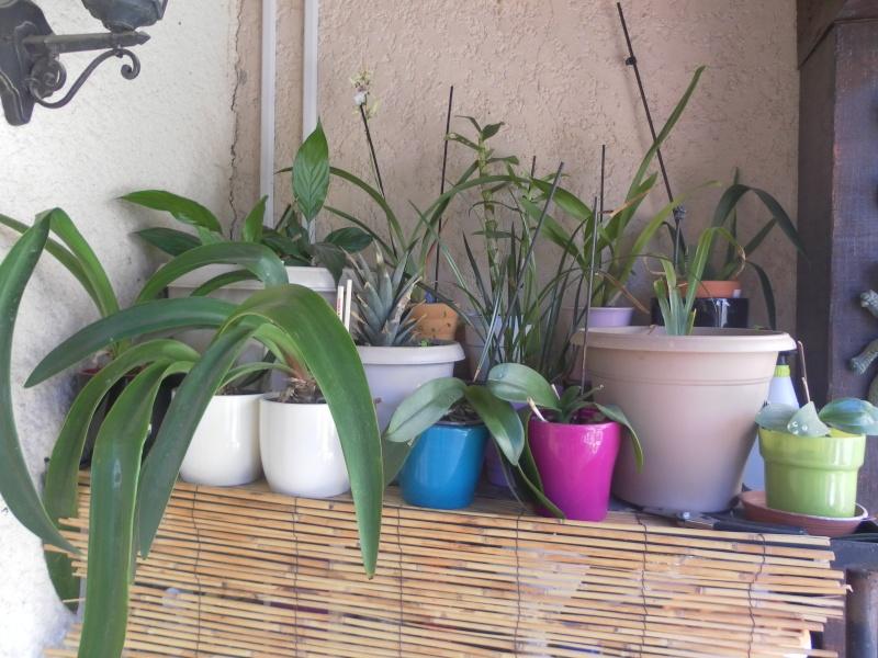 les orchidées de syljou Sam_7716