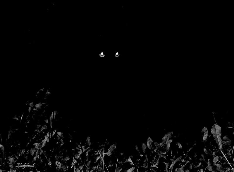 noir c'est noir Img_2310