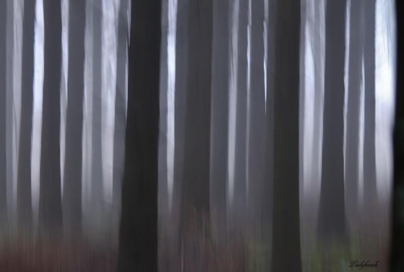 la forêt ( + 2 autres ) Img_6510