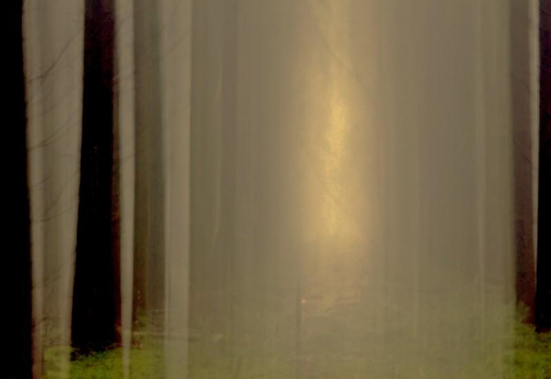 la forêt ( + 2 autres ) Img_6512