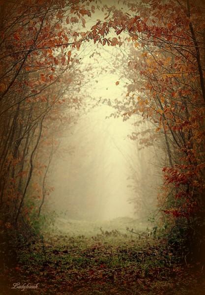 entrez dans ma forêt Img_6515