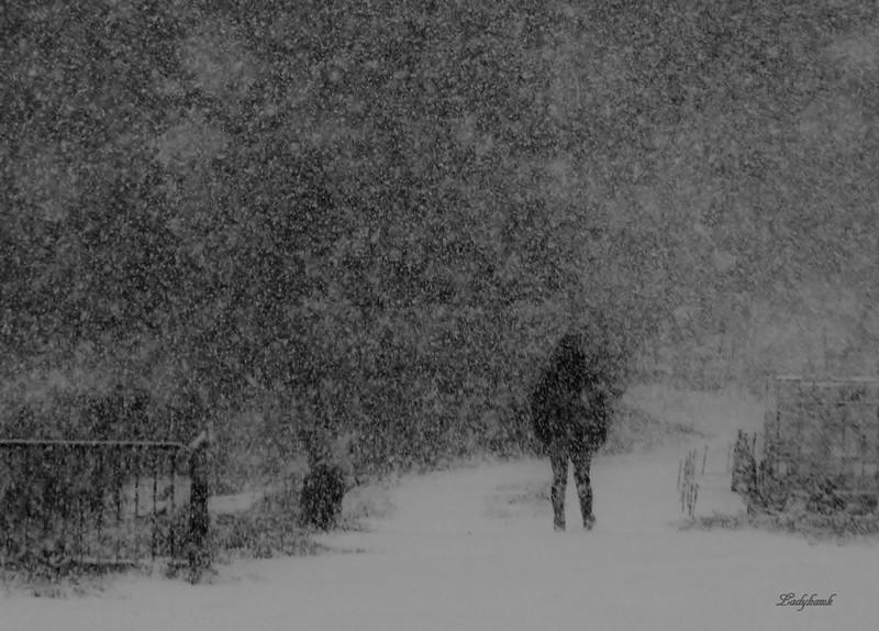 il neige Img_7113
