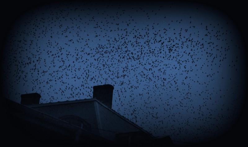les oiseaux Img_7510