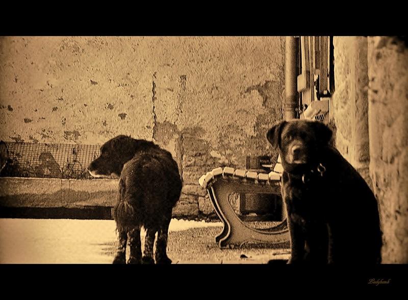 the farm dogs Img_7511
