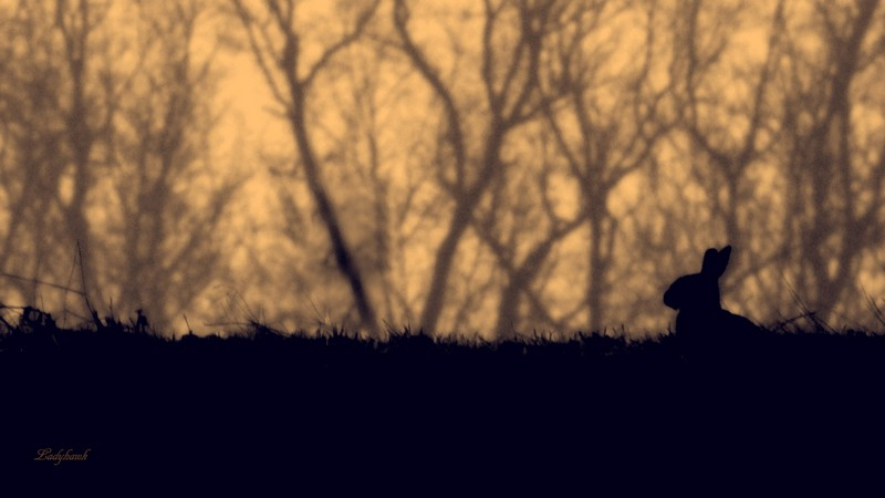 une silhouette Img_8314