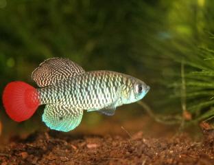 Petites nouvelles de ma fish room... - Page 4 Nothob14