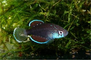 Petites nouvelles de ma fish room... - Page 2 Simpso10
