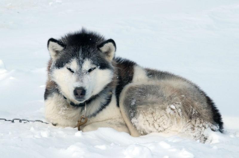 Iqaluit, territoire du Nunavut sur l'île de la Terre de Baffin au Canada !! 79809010