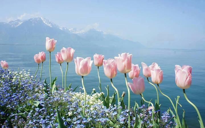 j'ai lu Tulips10