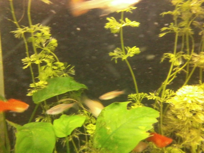 un poisson cyclope inconnu 20150211