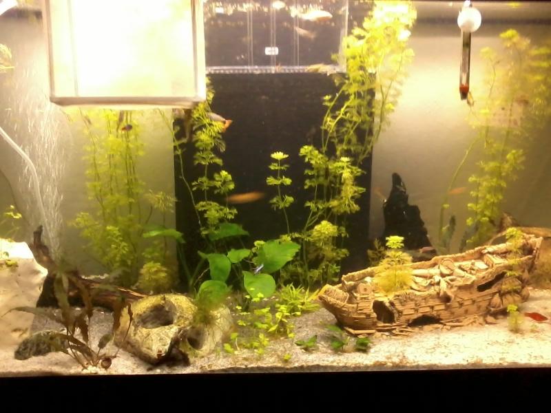 aquarium de fleurinaa 20150214