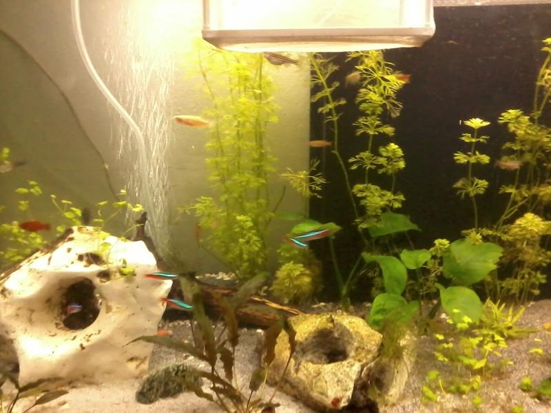 aquarium de fleurinaa 20150215
