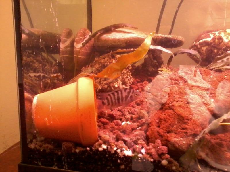 aquarium de fleurinaa 20150216