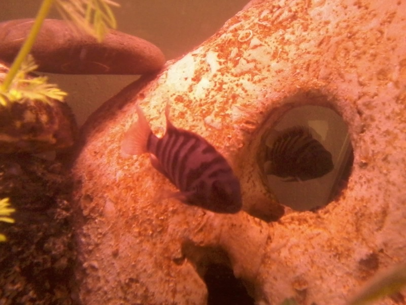 aquarium de fleurinaa 20150217