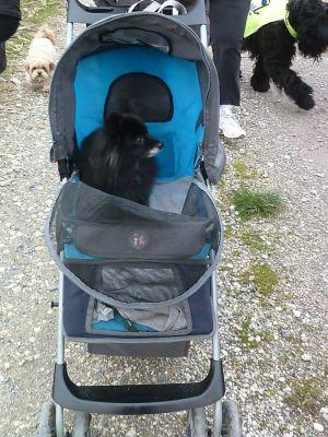 Modes de transport pour petits / vieux chiens qui fatiguent vite - Page 3 Nin10