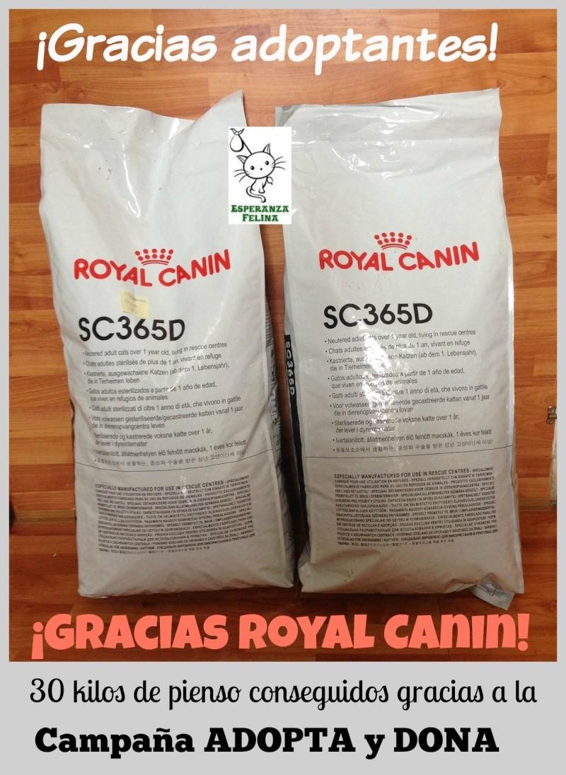 Kits de Adopción Royal Canin y donaciones de pienso a Esperanza Felina Montad10