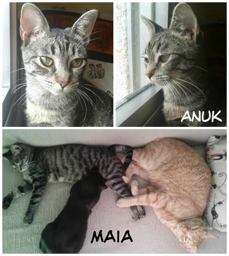 Anuk (ahora Xyra) y Maia con Itzi y Ruben Picmon11