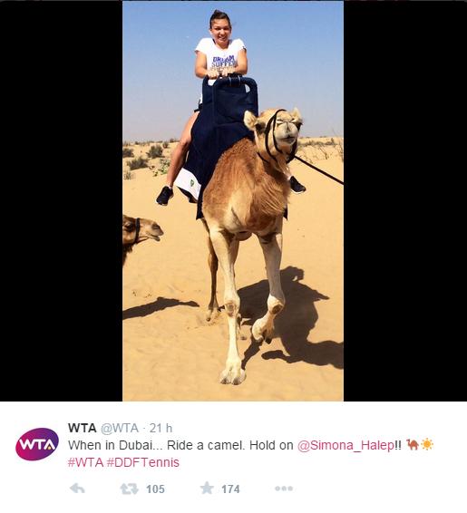 WTA DUBAI 2015 : infos, photos et vidéos - Page 2 Sans_197