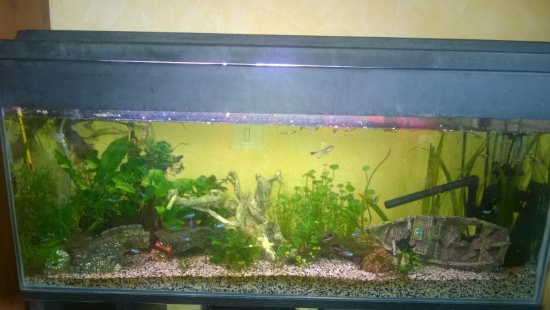 Mon 200 litres  Wp_20111