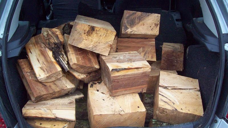 Donacija ravno iz šume 100_5326