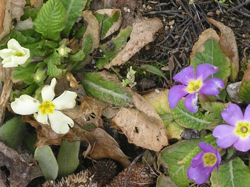 La nature se réveille, le printemps annonce son retour! Imgp0022