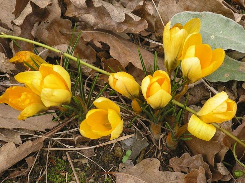 La nature se réveille, le printemps annonce son retour! Imgp0023