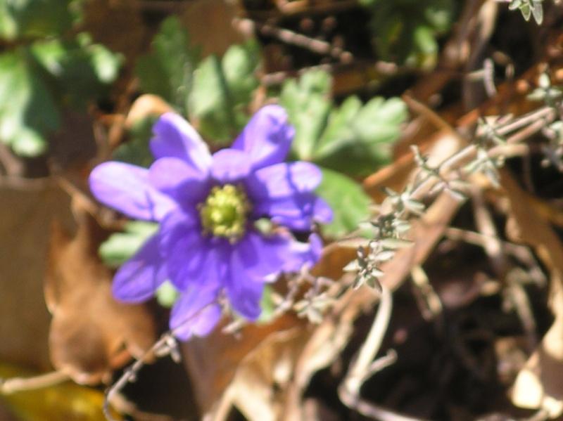 La nature se réveille, le printemps annonce son retour! Imgp0034