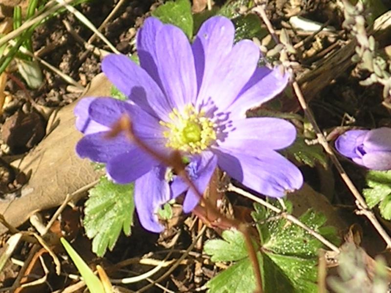 La nature se réveille, le printemps annonce son retour! Imgp0039