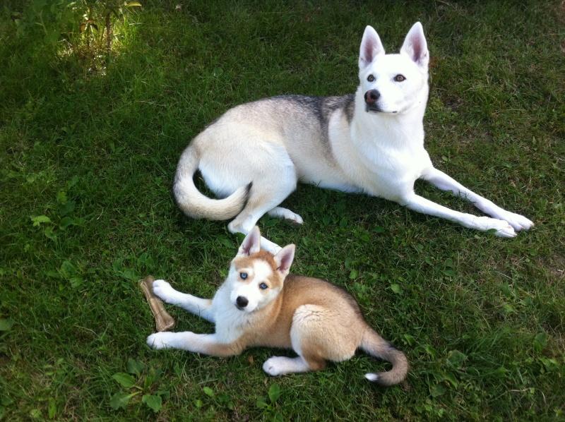 Hiwo et sa petite sœur  Img_3512