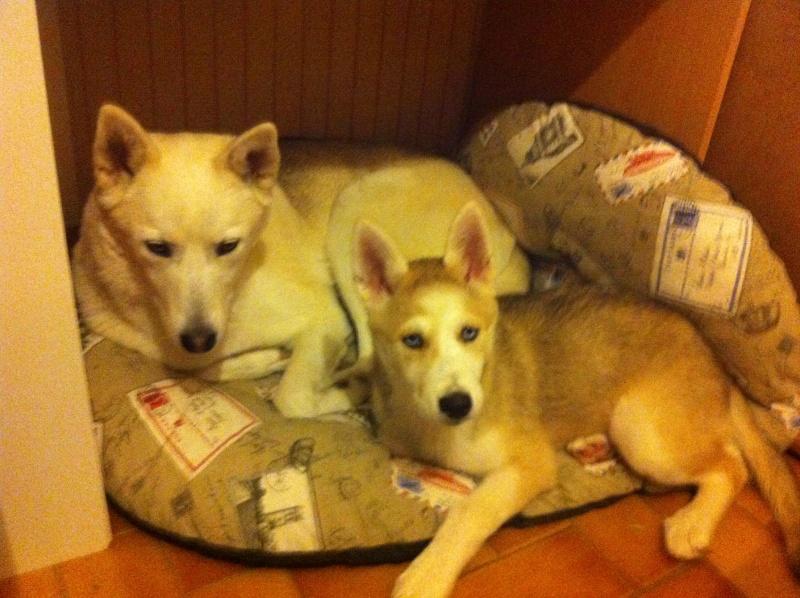 Hiwo et sa petite sœur  Img_3610