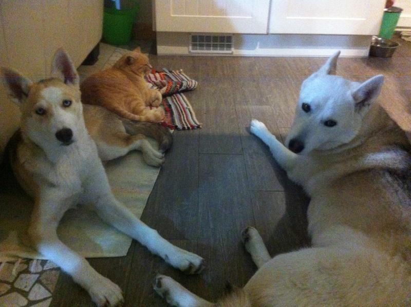Hiwo et sa petite sœur  Img_3811