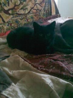 joliecat - JOLIECAT, femelle type européen noire, née le 20/07/2014 Image013