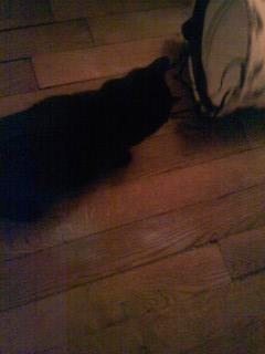 joliecat - JOLIECAT, femelle type européen noire, née le 20/07/2014 Image014