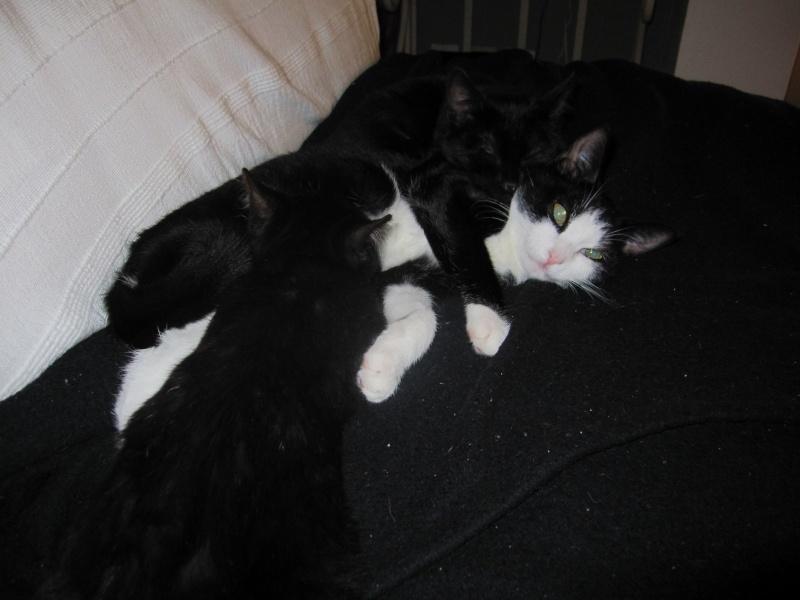 joliot - JOLIOT, chaton européen robe noire, né le 08/09/14 Img_1038