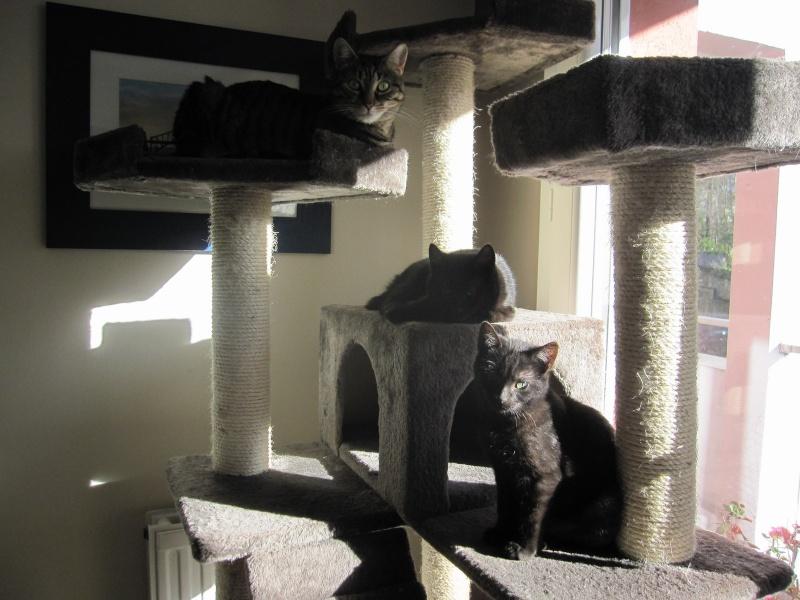 joliot - JOLIOT, chaton européen robe noire, né le 08/09/14 Img_1116