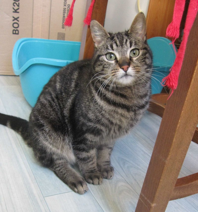 INAWA, chatte européenne tigrée, né en 2013 Img_1146