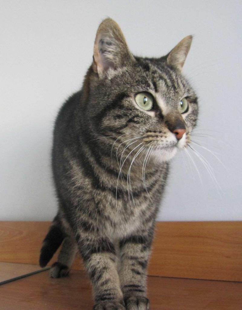 INAWA, chatte européenne tigrée, né en 2013 Img_1147