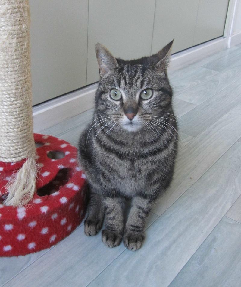 INAWA, chatte européenne tigrée, né en 2013 Img_1148