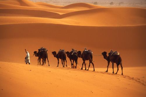 Présentation de cjm2405  - des nouvelles récentes du Maroc ? Chamea10