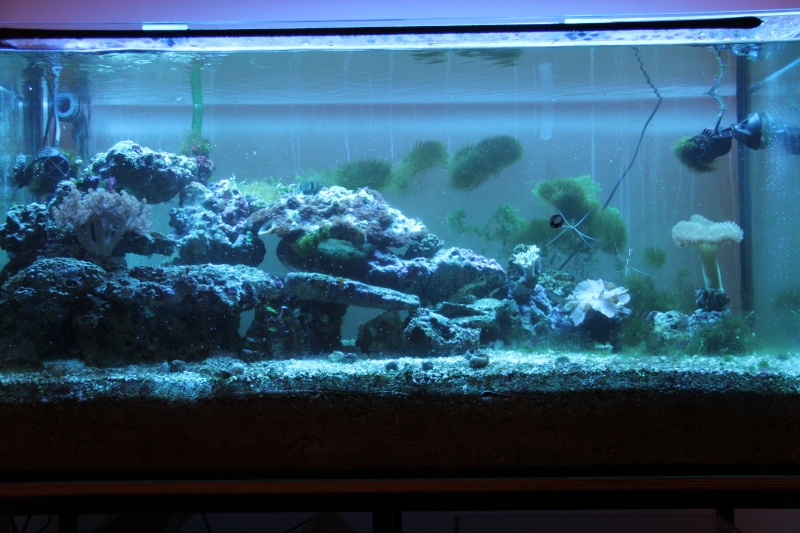 360 litres de fred Img_2010