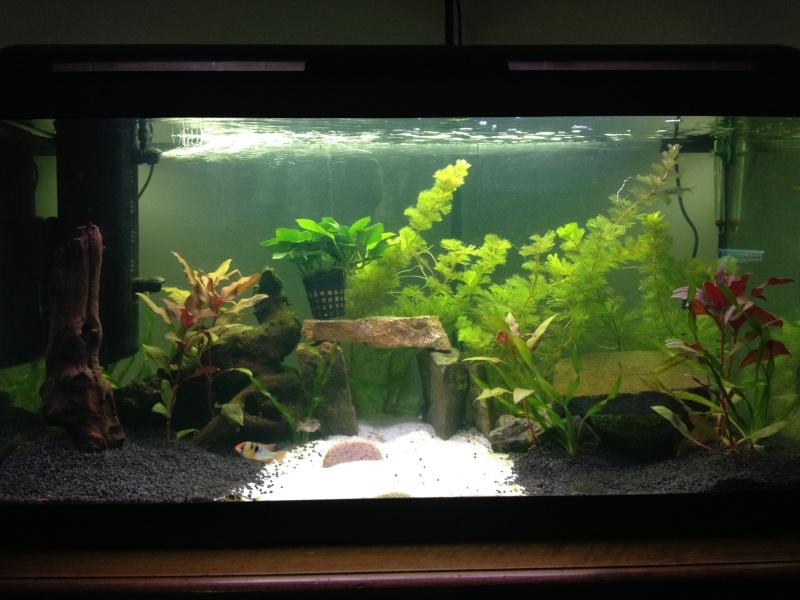 aquarium suite Img_0510