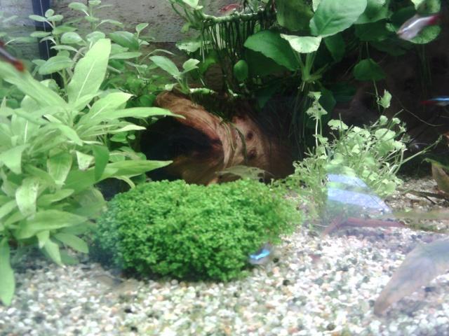 Mon aqua Img_2011